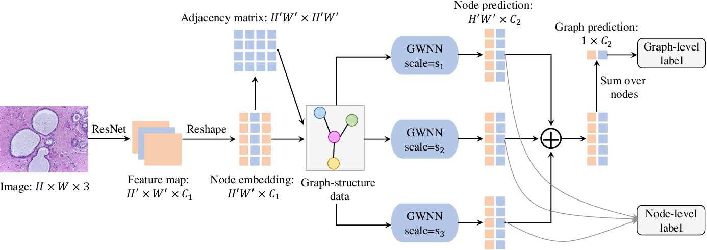 Figure 1 for MS-GWNN:multi-scale graph wavelet neural network for breast cancer diagnosis
