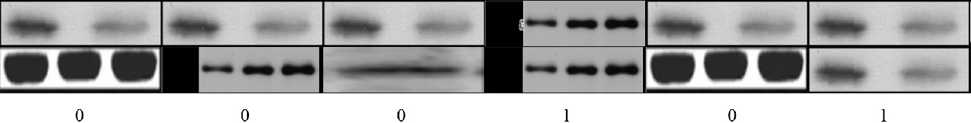 Figure 4 for Learning to identify image manipulations in scientific publications