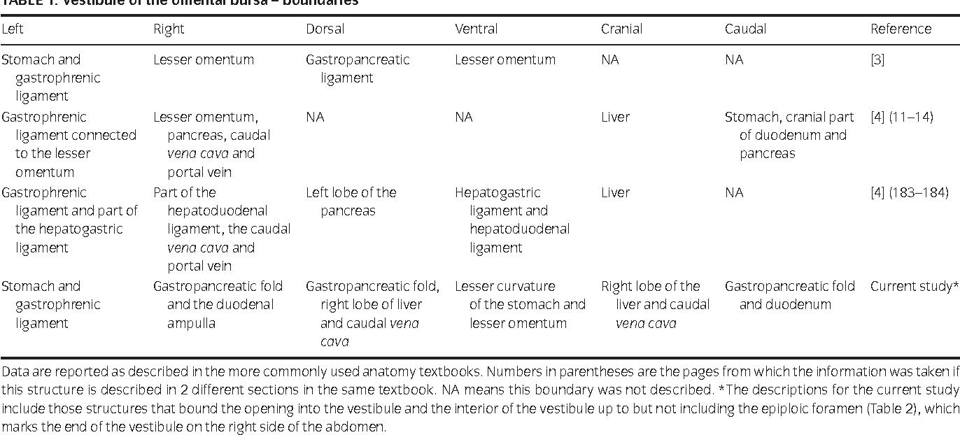 Anatomy Of The Vestibule Of The Omental Bursa And Epiploic Foramen