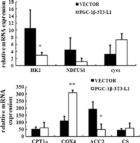 Fig. 6 Mitochondrial metabolism factors ACC2 and HK2 were downregulated and COX4 was upregulated. 3T3-L1 adipocytes transfected with PGC-1b or empty vector (pcDNA3.1Myc/His B) were induced to differentiate. Total RNA was extracted from stable lines transfected with pcDNA3.1 or pcDNA3.1-PGC-1b constructs. Quantitative real-time PCR was performed using the primers indicated in Table 1. Values represented are the mean ± SD from three independent experiments. **P \ 0.01, *P \ 0.05
