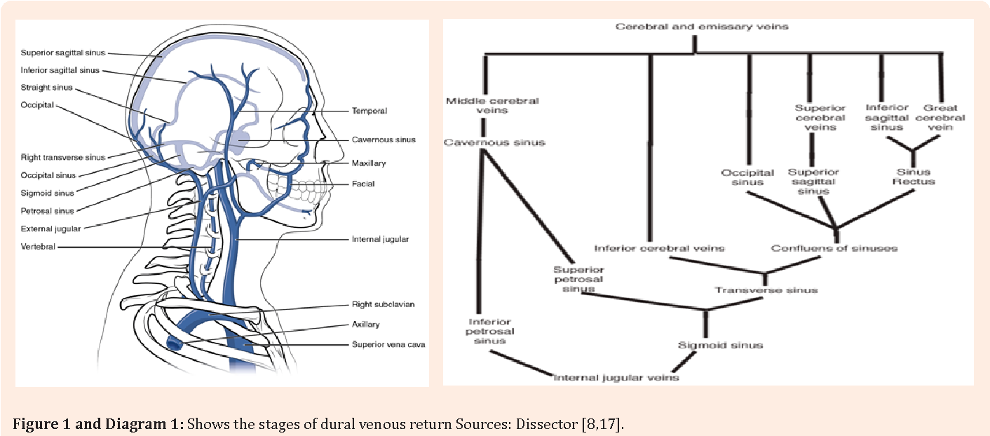 A Cadaveric Review Of The Variations In Anatomy In The Junction