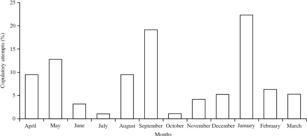 PDF] Reproductive Biology of Eastern Hoolock Gibbon Hoolock