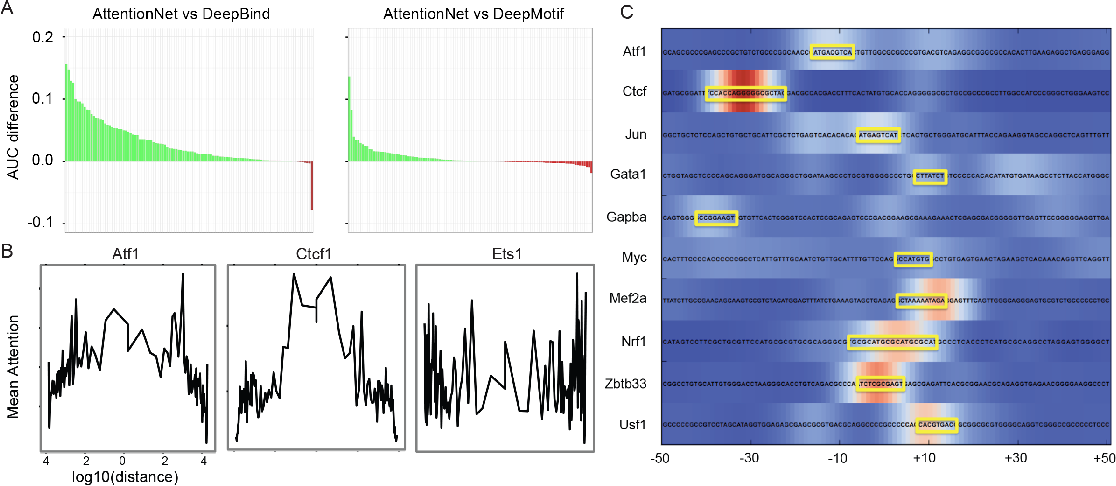 Figure 3 for Genetic Architect: Discovering Genomic Structure with Learned Neural Architectures