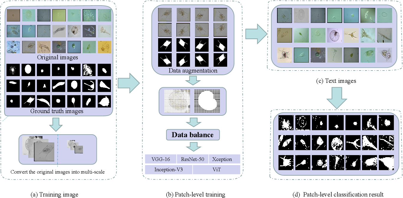 Figure 1 for A Comparison for Patch-level Classification of Deep Learning Methods on Transparent Environmental Microorganism Images: from Convolutional Neural Networks to Visual Transformers
