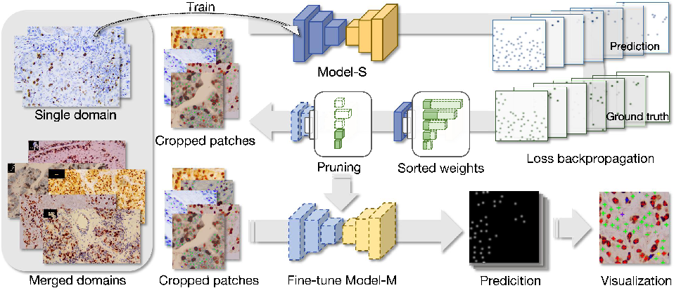 Figure 1 for Generalizing Nucleus Recognition Model in Multi-source Images via Pruning