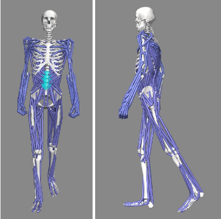 Figure 4 for Evaluating the Effect of Crutch-using on Trunk Muscle Loads