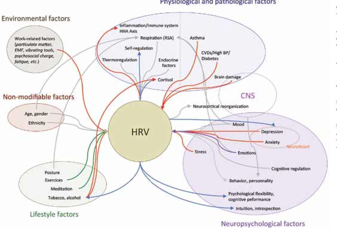 Influence diagram of physiological and environmental factors figure 3 ccuart Image collections