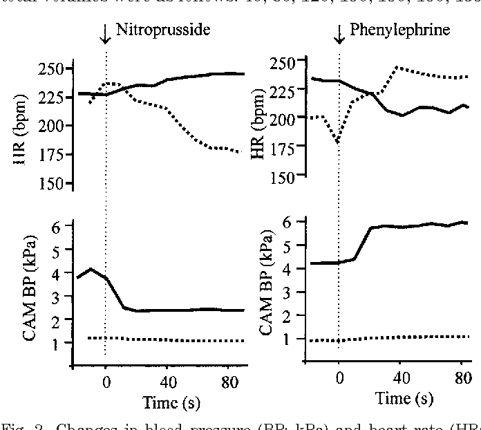 Fig. 2. Changes in blood pressure (BP; kPa) and heart rate (HR; beat/min) after injection of sodium nitroprusside and phenylephrine. Data from 2 individuals: 9-day-old embryo, dotted line; 21-day-old embryo, continuous line. CAM, chorioallantoic.
