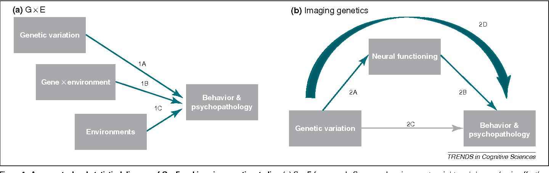 Gene Environment Interaction >> Understanding Risk For Psychopathology Through Imaging Gene
