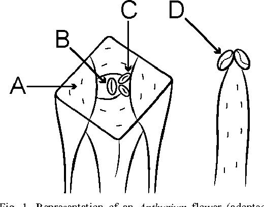 Figure 1 From Pollination Of Anthurium Araceae By Derelomine
