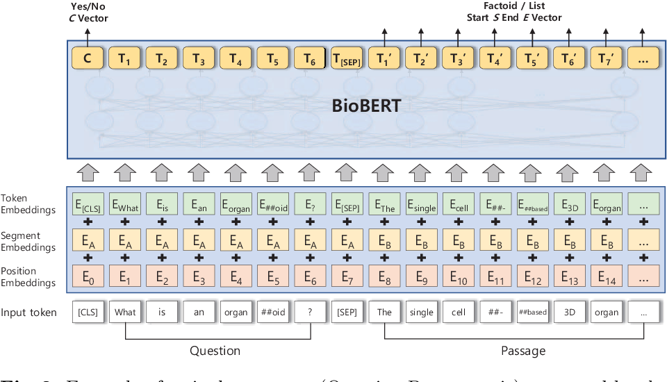Figure 3 for Pre-trained Language Model for Biomedical Question Answering