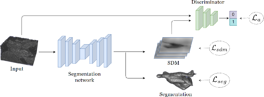 Figure 1 for Shape-aware Semi-supervised 3D Semantic Segmentation for Medical Images