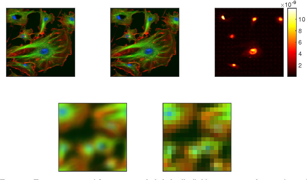 Figure 7: Top row: image of fluorescent endothelial cells (left), reconstructed image (center), and the difference between the normalized images (right), Bottom row: blurred image (left), 8X magnified subsampled blurred image (right)