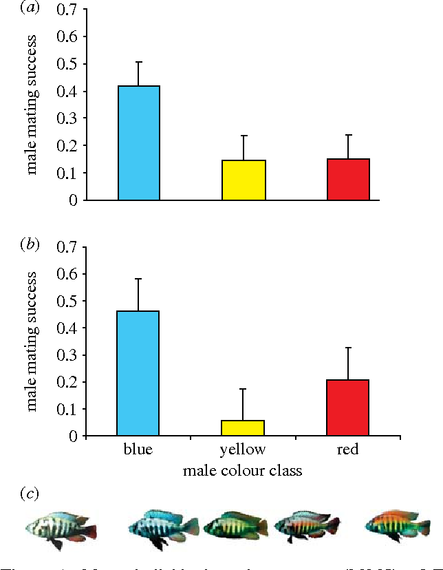 Sexual selection in cichlid fish