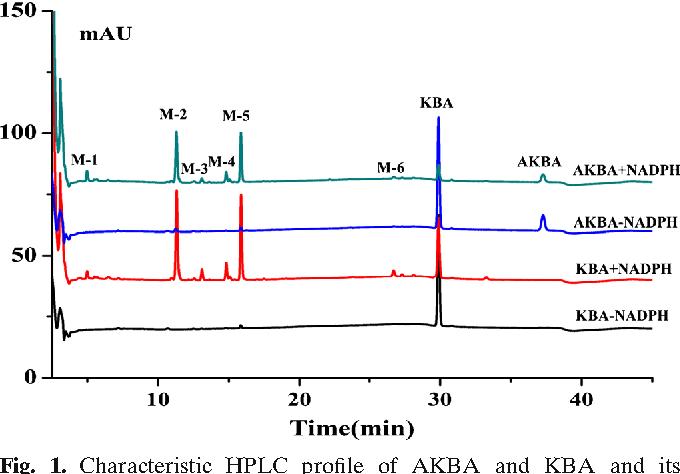 Metabolic Profile of 3-Acetyl-11-Keto-β-Boswellic Acid and