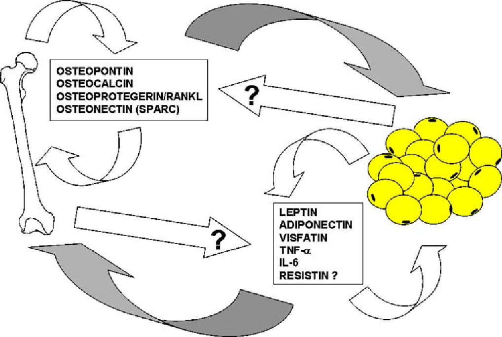 Figure 1 From The Bone Adipose Axis In Obesity And Weight Loss