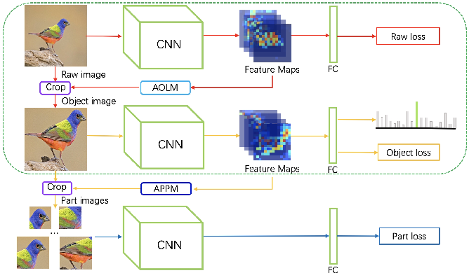Figure 1 for Three-branch and Mutil-scale learning for Fine-grained Image Recognition (TBMSL-Net)