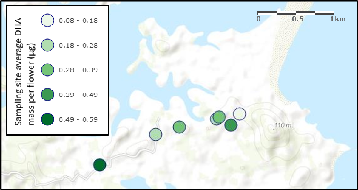 Figure 40: Manuka flower sampling sites on the Ngunguru Ford and associated average mass of DHA per f lower for each s ite.
