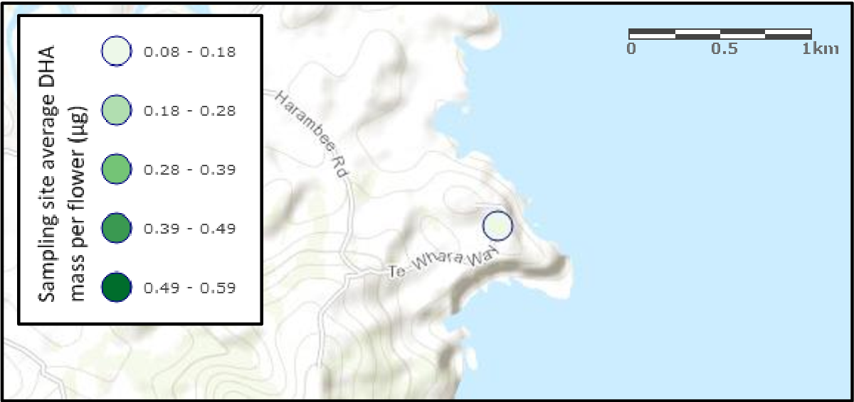 Figure 42: The single manuka flower sampling site at the base of the Taiharuru Peninsula and associated average mass of DHA per f lower for the site.