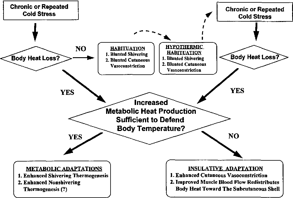 Figure 5 From Human Adaptations To Cold Stress Semantic Scholar