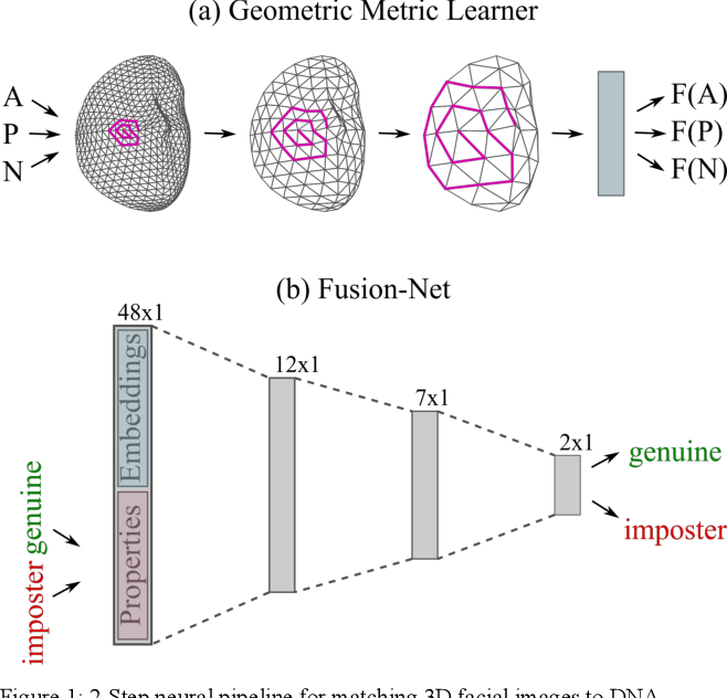 Figure 1 for 3D Facial Matching by Spiral Convolutional Metric Learning and a Biometric Fusion-Net of Demographic Properties