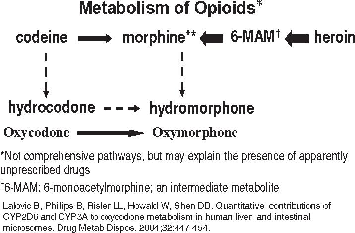 Figure 2 Metabolism of opioids.