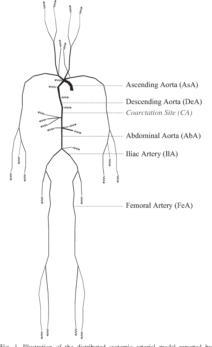 Systemic Arterial System Semantic Scholar