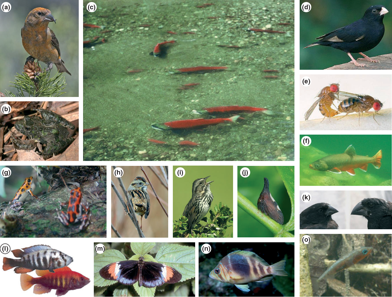 Ecology sexual selection and speciation