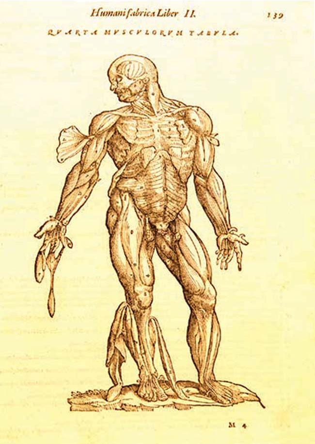Figure 3 from Evolution of illustrations in anatomy: a study from ...