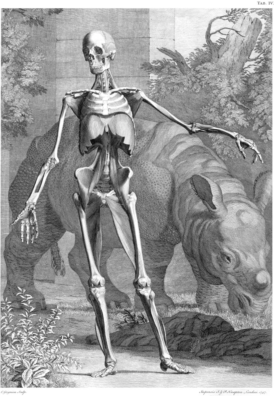 Evolution Of Illustrations In Anatomy A Study From The Classical