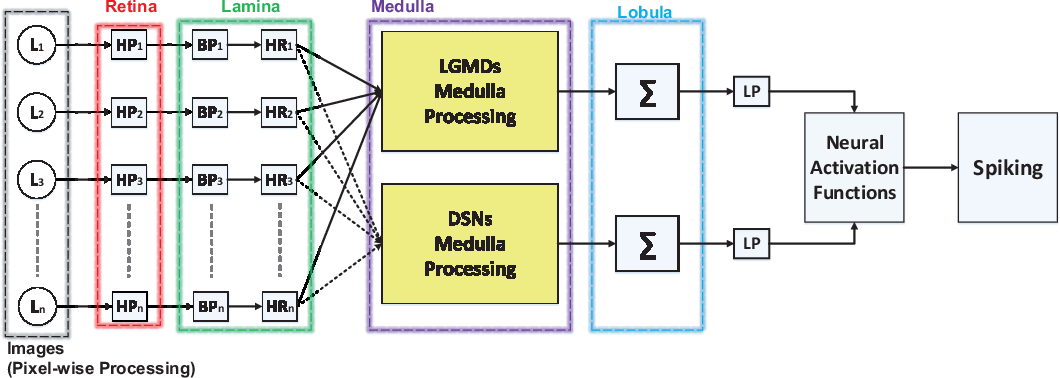 Figure 2 for Synthetic Neural Vision System Design for Motion Pattern Recognition in Dynamic Robot Scenes