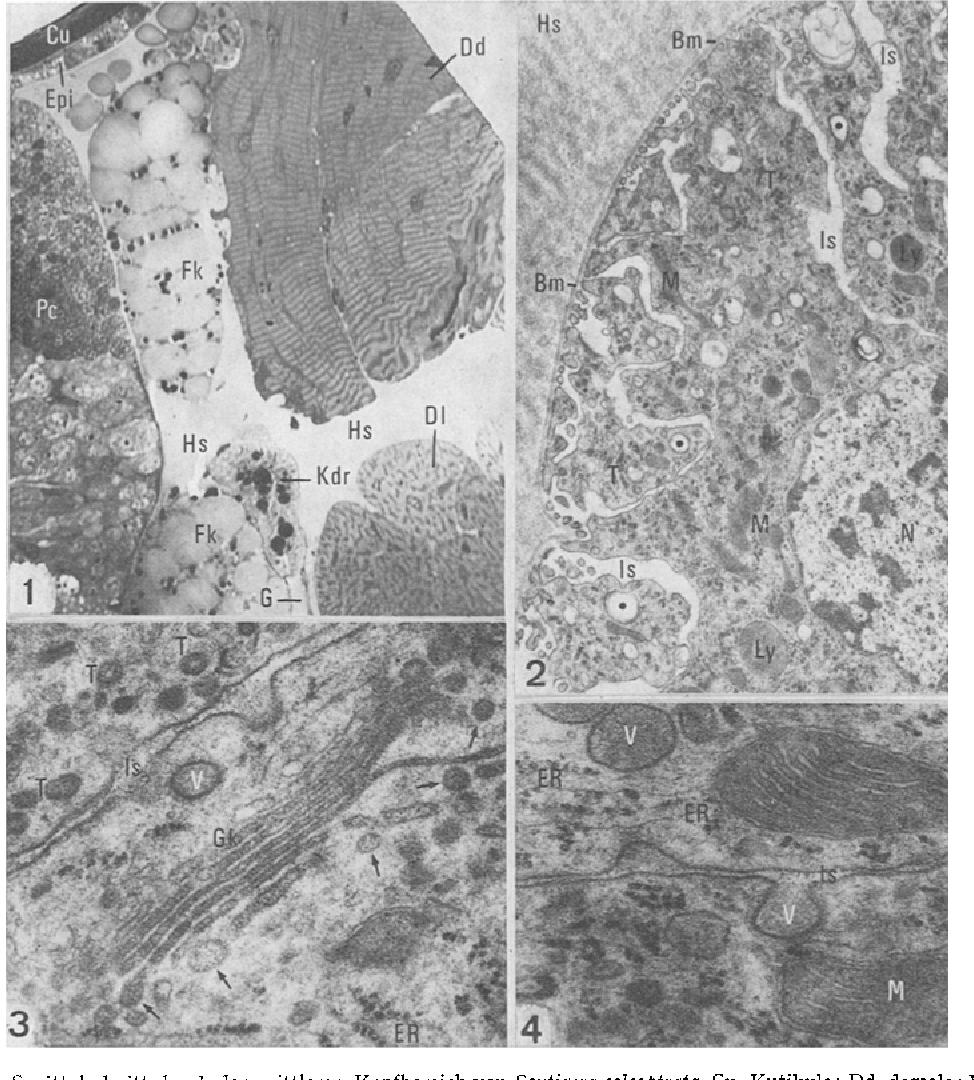 Figure 1 from Eine bisher unbekannte endokrine Drüse im Kopf ...