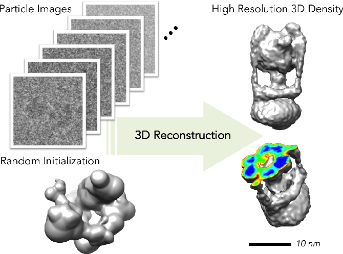 Figure 1 for Building Proteins in a Day: Efficient 3D Molecular Reconstruction