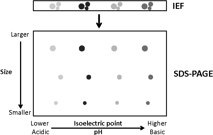 high density lipoproteins kontush anatol chapman m john