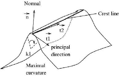 Figure 2: A crest line example.