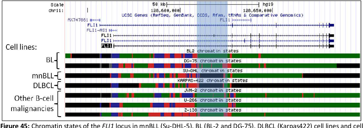 Figure 45: Chromatin states of the FLI1 locus in mnBLL (Su-DHL-5), BL (BL-2 and DG-75), DLBCL (Karpas422) cell lines and cell lines from three other B-cell malignancies (JCM-2, U-266, Z-138). Depicted are from the top to the bottom: scale bar in kb, genome base position in bp, the UCSC gene track showing all transcripts of the FLI1 gene (reading direction exon 1 on the left to last exon on the right) as well as the chromatin states of the respective cell lines. The chromatin states are represented by the following color code: black, repressed heterochromatin; grey, repressed promoter; blue, active promoter; red, regulatory element and green, transcribed region. Highlighted in blue is a block of repressed chromatin in the mnBLL cell line Su-DHL-5 and the DLBCL cell line Karpas422 in the first intron of FLI1 which might be associated with the loss of FLI1 expression.