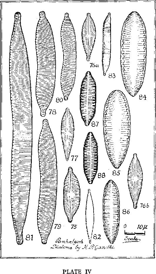 figure 75
