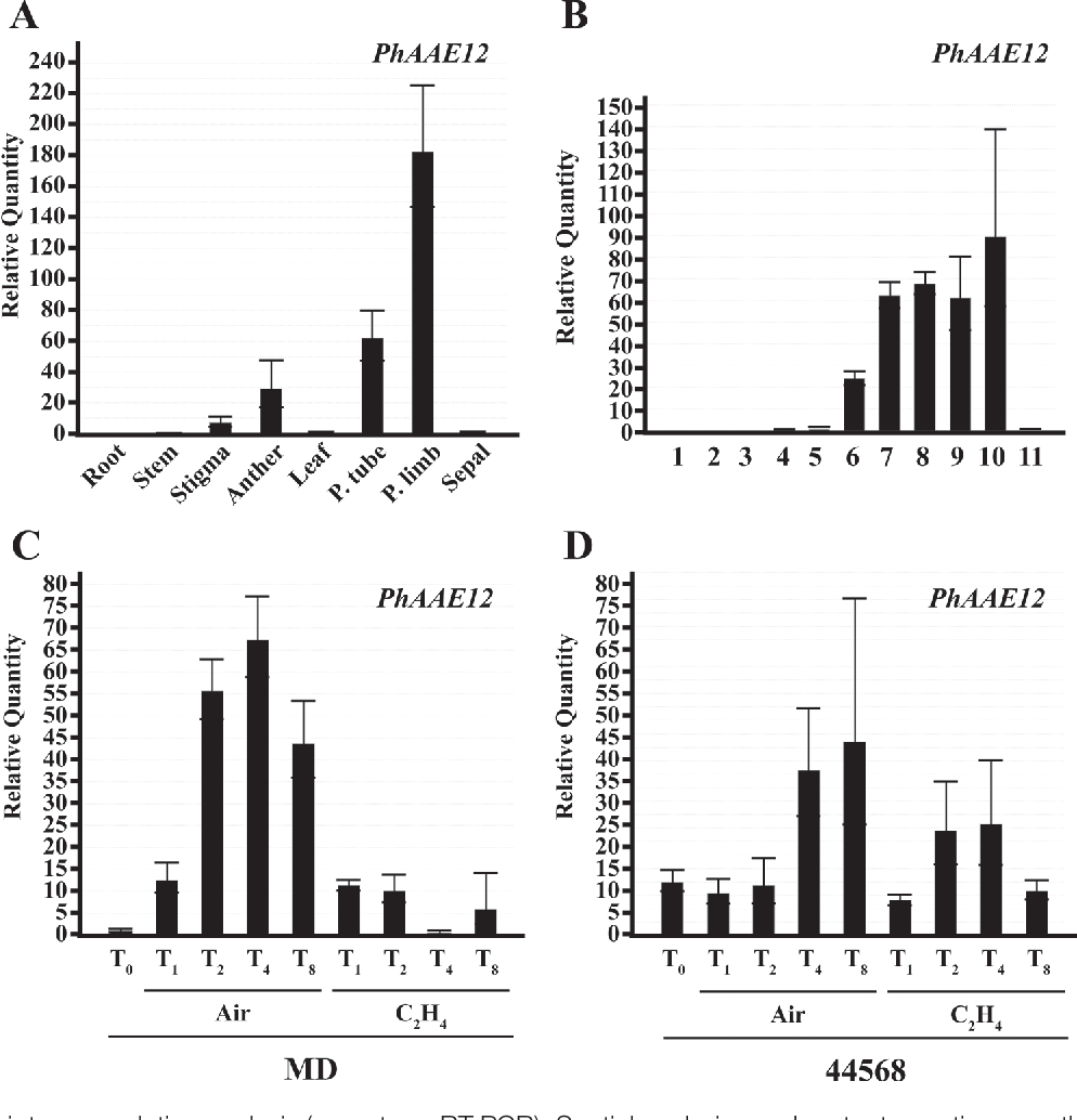 A peroxisomally localized acyl activating enzyme is required for figure 3 ccuart Choice Image