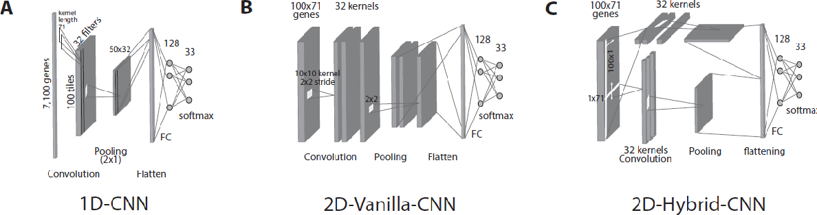 Figure 3 for Convolutional neural network models for cancer type prediction based on gene expression