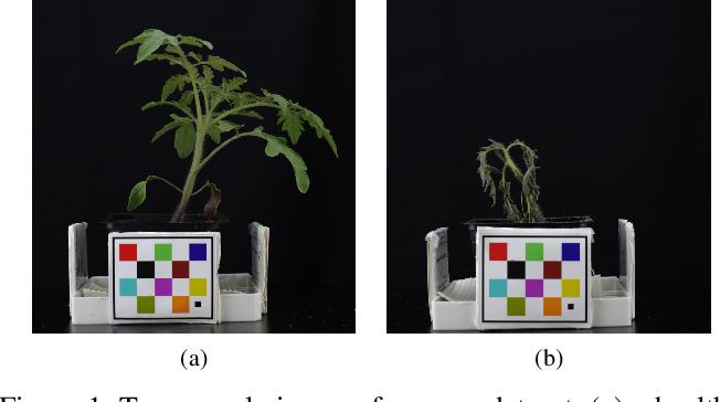 Figure 1 for Plant Stem Segmentation Using Fast Ground Truth Generation