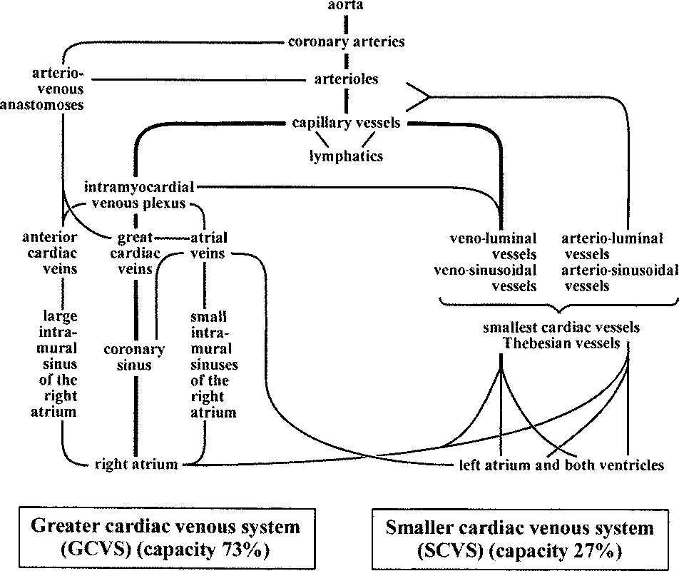 The Clinical Anatomy of Coronary Arteries - Semantic Scholar
