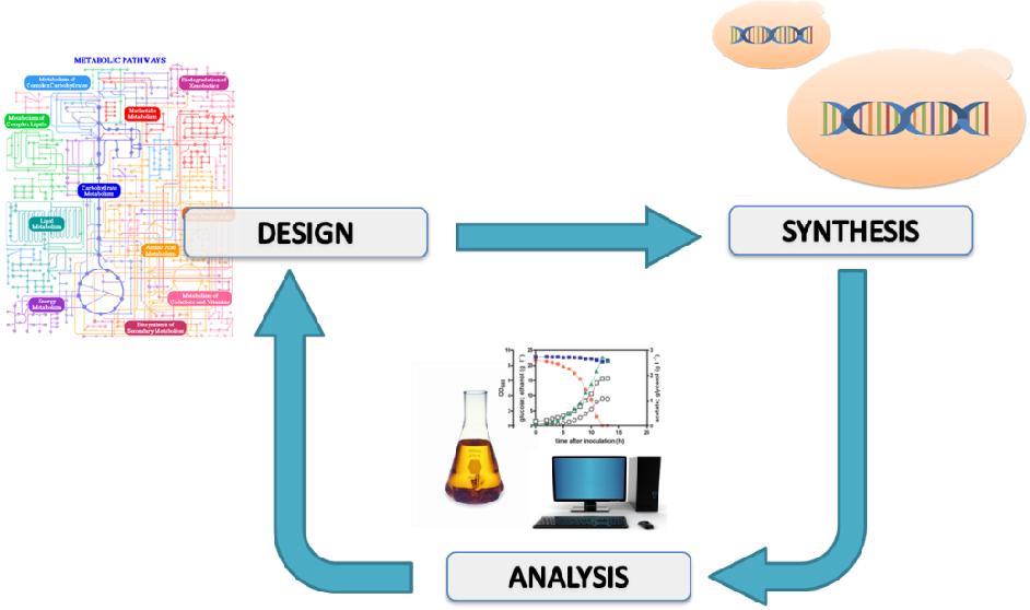 PDF] Novel strategies for engineering redox metabolism in