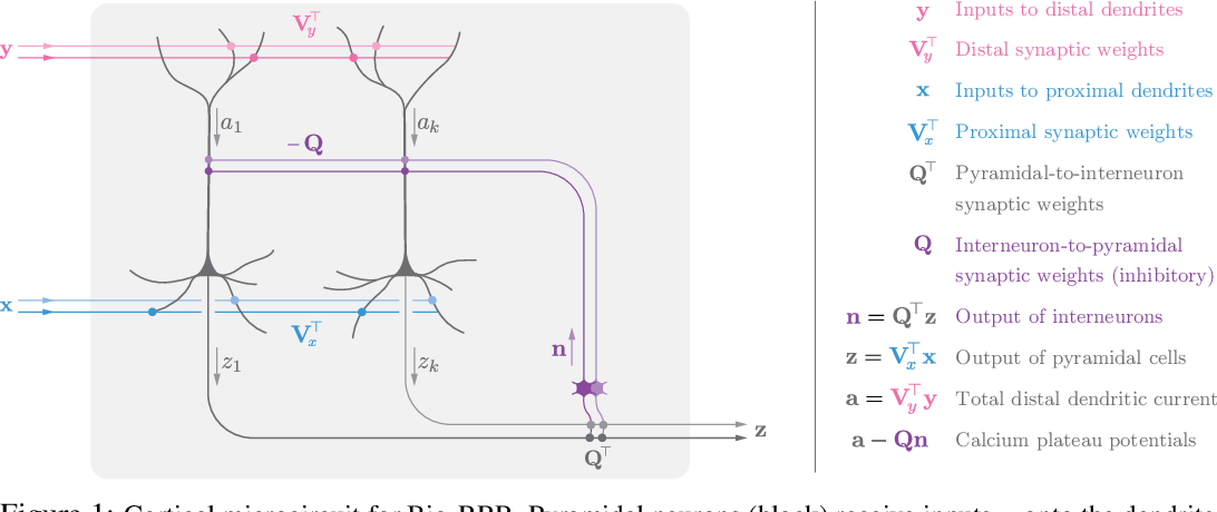 Figure 1 for A simple normative network approximates local non-Hebbian learning in the cortex