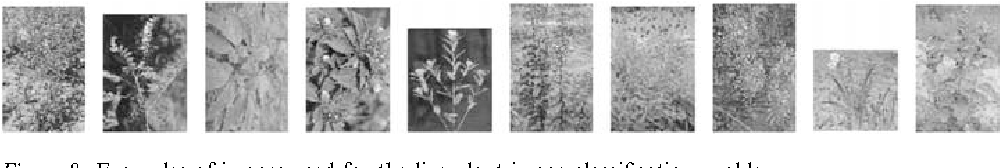 Figure 8. Examples of images used for the live plant image classification problem.