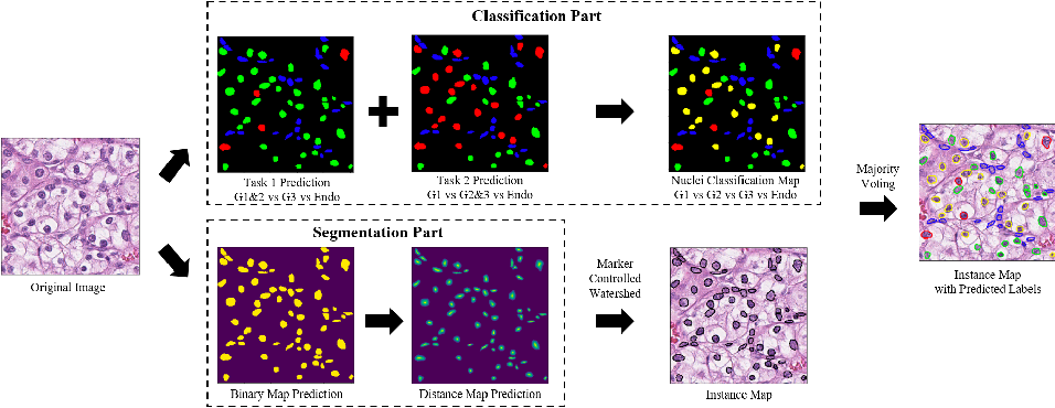 Figure 1 for Nuclei Grading of Clear Cell Renal Cell Carcinoma in Histopathological Image by Composite High-Resolution Network