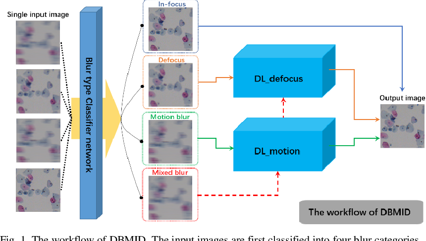 Figure 1 for Blind deblurring for microscopic pathology images using deep learning networks