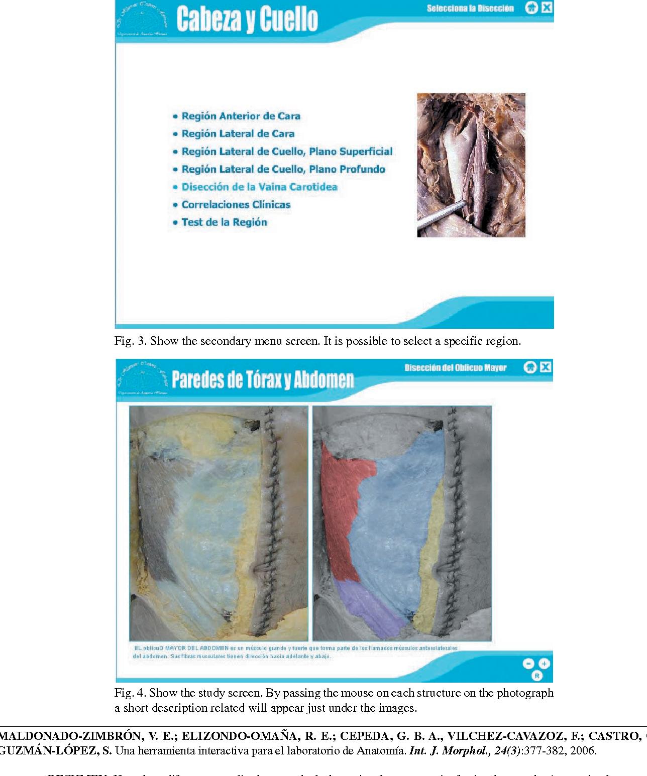 Excepcional Anatomía Y Fisiología Capítulo 3 Componente - Anatomía ...