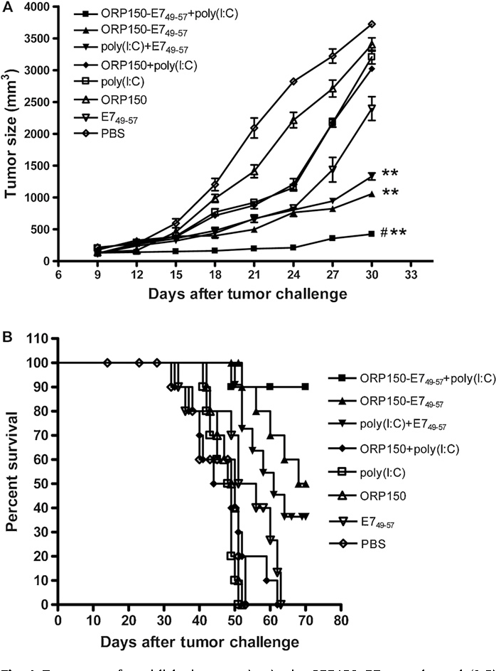 Figure 4 From Enhanced Anti Tumor Effects Of Hpv16e749 57 Based
