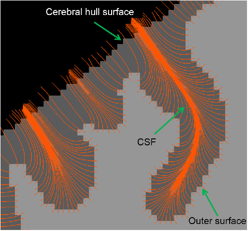 Figure 1. A 2D illustration of establishing correspondences between the outer cortical surface and the cerebral hull surface based on Laplace's equation, with the orange curves indicating the streamlines.
