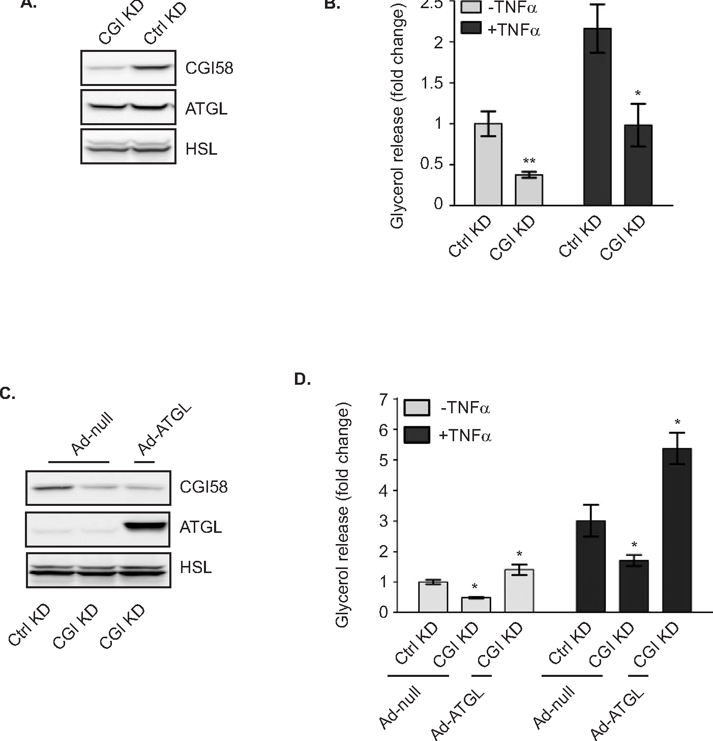 Relative contribution of adipose triglyceride lipase and hormone figure 5 pooptronica Gallery